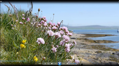 Orkney Project Filming Flowers