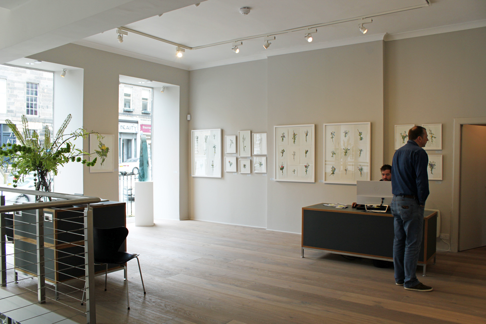 Flora Depicta Exhibition at The Scottish Gallery
